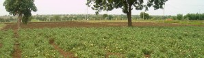 waste water usage in agriculture